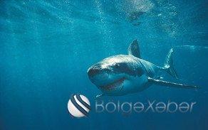 Braziliyada köpək balığı gənc oğlanı parçalayıb- VİDEO